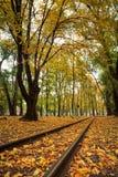 Sporen in het stadspark met bomen en gevallen geel de herfstverlof stock foto's