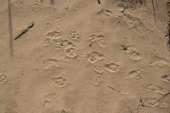Sporen in het zand Royalty-vrije Stock Fotografie