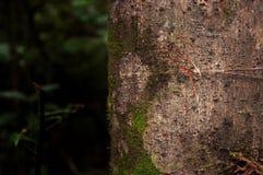 Sporen op boom stock fotografie