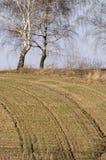 Sporen op de heuvel Stock Fotografie