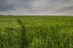 Sporen op gewassengebied Stock Foto's
