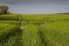 Sporen op gewassengebied met avondzon Stock Foto's