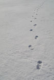 Sporen op harde sneeuw Stock Afbeeldingen