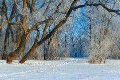 Sporen op sneeuw Royalty-vrije Stock Afbeelding