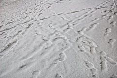 Sporen op witte sneeuw Royalty-vrije Stock Foto