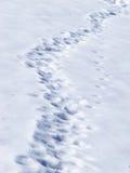 Sporen in sneeuw Stock Fotografie