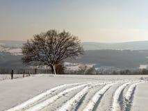 Sporen in Sneeuw Stock Afbeeldingen