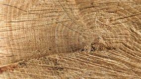 Sporen van besnoeiingen op een boomstam stock afbeeldingen