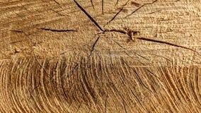 Sporen van besnoeiingen op een boomstam royalty-vrije stock foto
