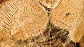 Sporen van besnoeiingen op een boomstam stock foto