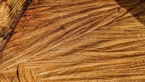Sporen van besnoeiingen op een boomstam royalty-vrije stock afbeelding