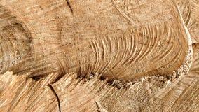 Sporen van besnoeiingen op een boomstam royalty-vrije stock afbeeldingen