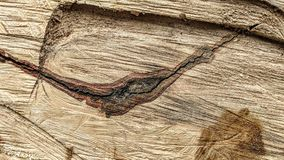 Sporen van besnoeiingen op een boomstam stock foto's