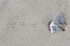 Sporen van een kleine vogel in het zand stock foto