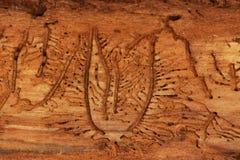 Sporen van kevers onder de schors op een nette boom Stock Foto