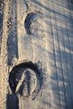 Sporen van paardhoeven stock foto