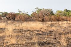 Sporen van schuine streep en brandwond in de wildernis, Agonda-Strand, Goa, India stock foto