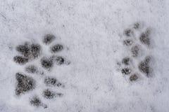 Sporen van vier hondpoten op witte verse sneeuwachtergrond Royalty-vrije Stock Foto