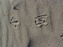 Sporen van vogel Stock Afbeeldingen
