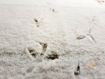 Sporen van vogels in de sneeuw in de winter stock afbeelding