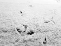 Sporen van vogels in de sneeuw in de winter royalty-vrije stock foto's