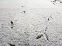 Sporen van vogels in de sneeuw in de winter stock foto