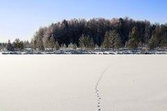 Sporen van wild dier op de sneeuw Royalty-vrije Stock Fotografie