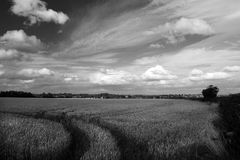 Sporen in wheatfield Stock Afbeeldingen