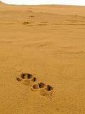 Sporen in woestijn Royalty-vrije Stock Afbeeldingen