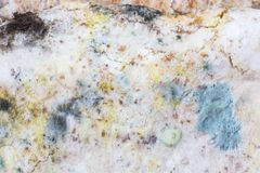Spores blanches et élevage vert de moule sur le pain Photographie stock