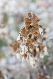 Spores. Royalty Free Stock Photo