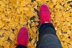Sportów buty Zdjęcie Stock