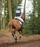 Sport équestre, cheval galopant Photos stock