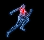 Sport anatomy - runner Stock Photography