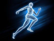 Sport anatomy - runner. Anatomical illustration of a runner Stock Photos