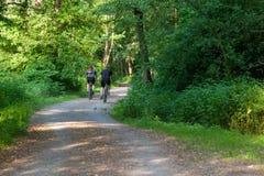 Sport biker on forrest path royalty free stock image
