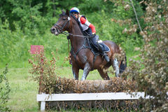 Sport. Cross-country fence. Disobedience horse Stock Image