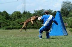 Sport del cane Fotografie Stock Libere da Diritti