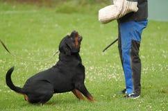 Sport del cane Immagini Stock