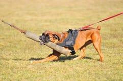 Sport del cane Immagine Stock