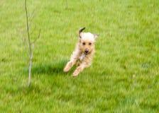 Sport des Hundes Lizenzfreies Stockfoto