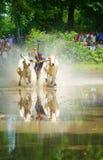 Sport di attività, agricoltore vietnamita, corsa della mucca Immagini Stock Libere da Diritti