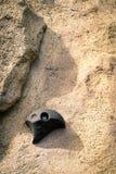 Sport di attività della presa del piede di arrampicata Fotografie Stock