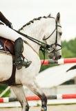 Sport di salto equestre Fotografie Stock