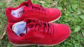Sport e soldi Le fatture sono in scarpe da tennis fotografia stock libera da diritti