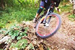 Sport Een fietser op een fiets met een bergfiets in het bos royalty-vrije stock fotografie