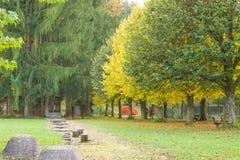 Sport en gezondheid in herfstpark Stock Foto