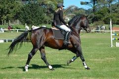 Sport equestre Immagini Stock