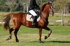 Sport equestre Fotografia Stock Libera da Diritti