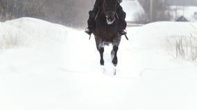 Sport equestre - donna del cavaliere sul cavallo che galoppa nel campo nevoso stock footage